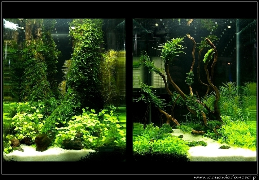 Fotorelacja z: V The Art of the Planted Aquarium