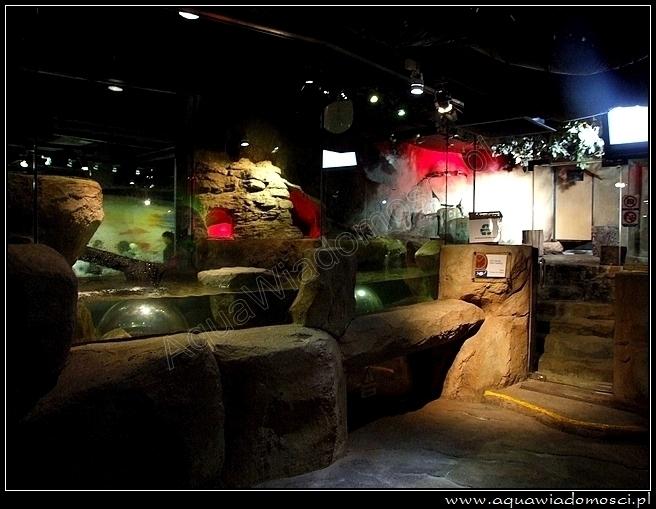 Fotorelacja z: KLCC Aquarium