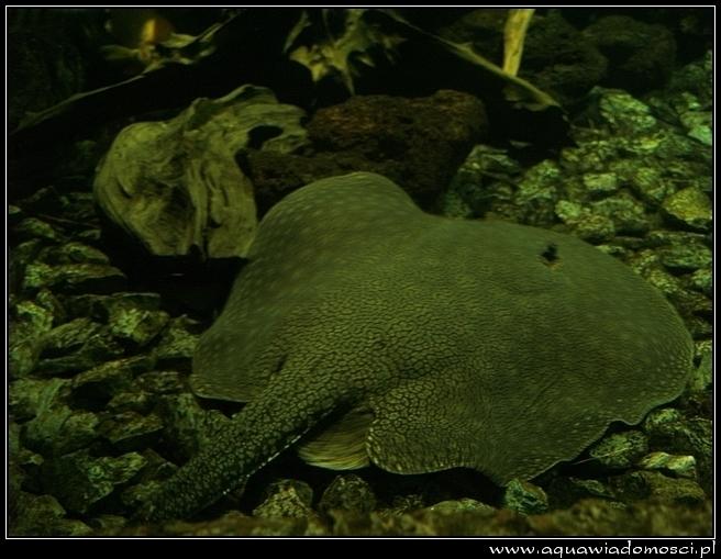 Fotorelacja z: Obri Akvarium