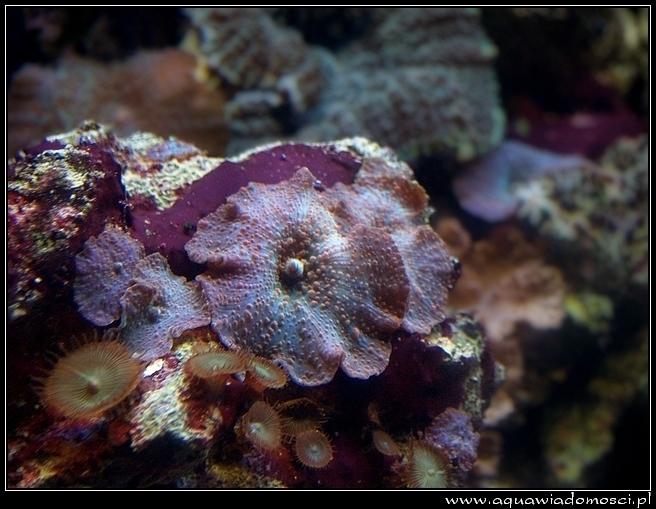 timmendorfer strand sea life