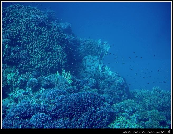 Fotorelacja z: Rafa Koralowa Port Ghalib - SeaScope