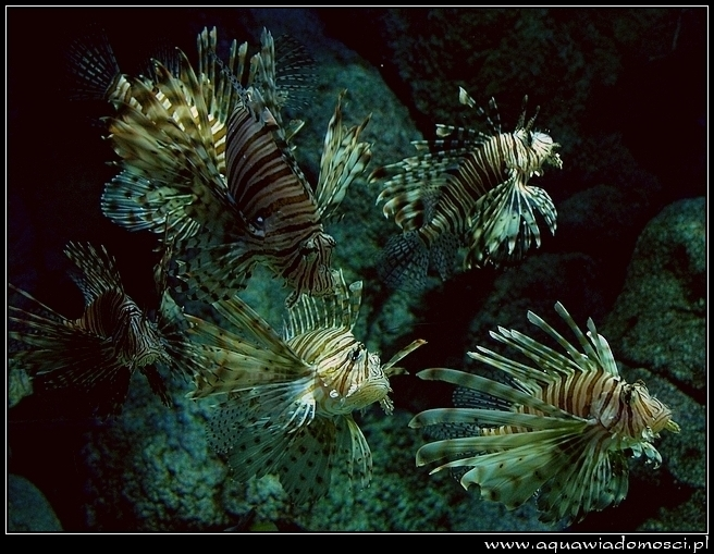 Fotorelacja z: TurkuraZOO Aquarium Istambuł